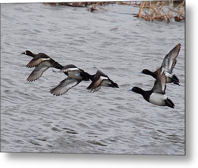 Metal Print featuring the photograph Take Flight No. 4 by Janice Adomeit