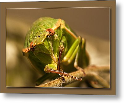 Metal Print featuring the digital art Take My Pic 01 by Kevin Chippindall