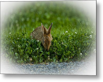 Take Time To Smell The Clover Metal Print
