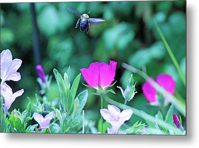Takeoff Metal Print by Becky Lodes