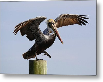 Taking A Leap Of Faith Metal Print by Paulette Thomas