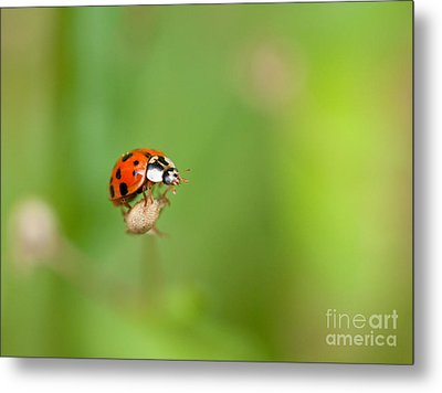 Taking Risks Metal Print by Sue OConnor