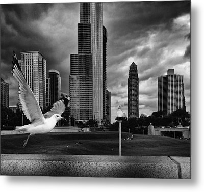 Metal Print featuring the photograph Taking Wing by Coby Cooper