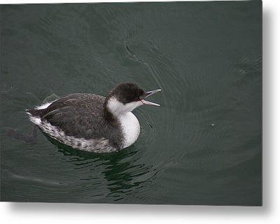 Talking Grebe Metal Print by Jerry Cahill