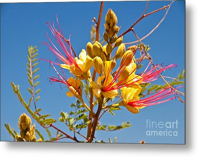 Tall And Bright Metal Print by Bob and Nancy Kendrick