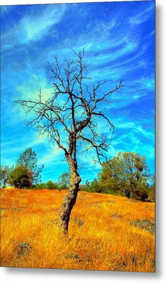 Tall Bare Tree With White Clouds And Blue Sky. Metal Print by Gregory Dean