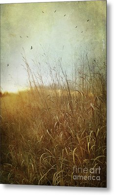Tall Grass Growing In Late Autumn Metal Print by Sandra Cunningham
