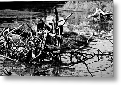 Metal Print featuring the photograph Tangle Wood by Randall  Cogle