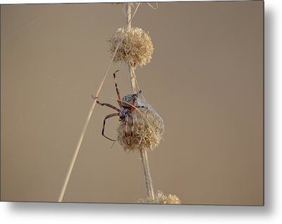 Tangled  Metal Print by Melissa  Maderos