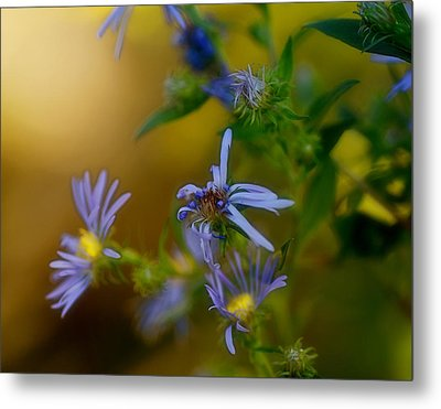 Tangled Up In Blue Metal Print by Susan Capuano