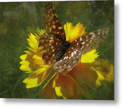 Tattered Wings Metal Print by Cindy Wright
