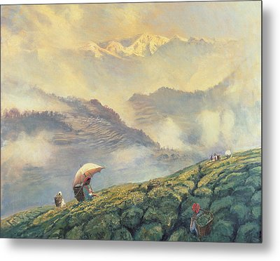 Tea Picking - Darjeeling - India Metal Print by Tim Scott Bolton