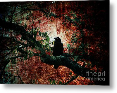 Tempting Fate Metal Print by Andrew Paranavitana