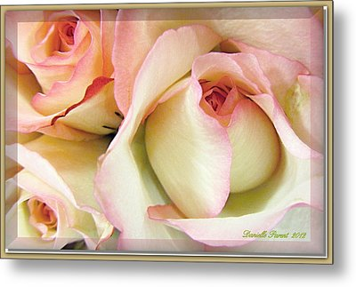 Tenderdly  Rose Metal Print by Danielle  Parent