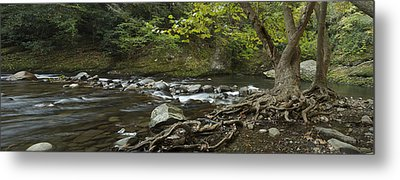 Tennessee Stream Panorama 6045 6 Metal Print by Michael Peychich