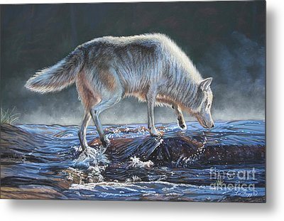 Testing The Waters Metal Print by Deb LaFogg-Docherty