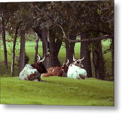 Texas Long Horns Metal Print