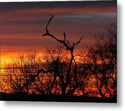 Texas Spanish Oak Tree  Sunset Metal Print by Rebecca Cearley