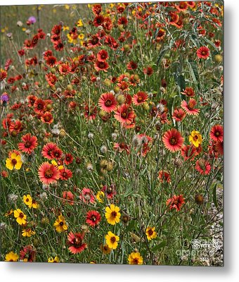 Texas Wildflowers Metal Print