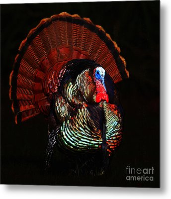 Thanksgiving Turkey - Painterly - Square Metal Print by Wingsdomain Art and Photography