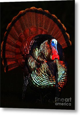 Thanksgiving Turkey - Painterly Metal Print by Wingsdomain Art and Photography
