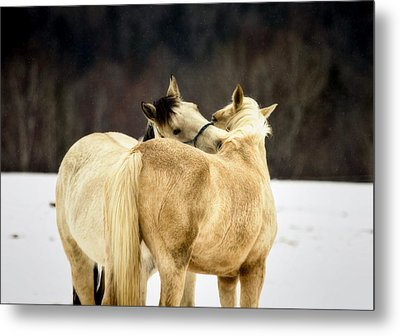 That Loving Moment Metal Print by Gary Smith