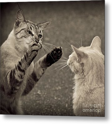 That Mouse Was This Big Metal Print by Kim Henderson
