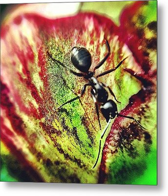 The Ants Have Arrived Metal Print