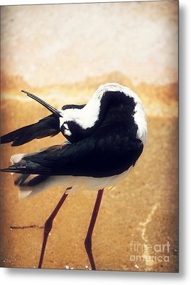 The Ballerina Bird Metal Print by Peggy Franz