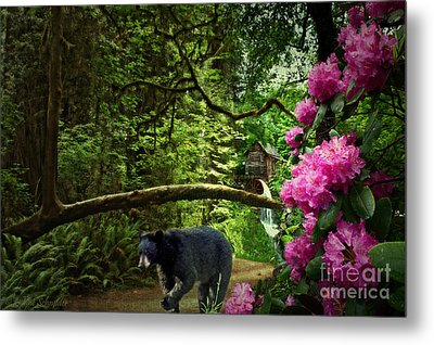 The Bear Went Over The Mountain Metal Print by Lianne Schneider