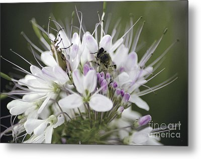 The Beetle And The Bee Metal Print by Donna Greene