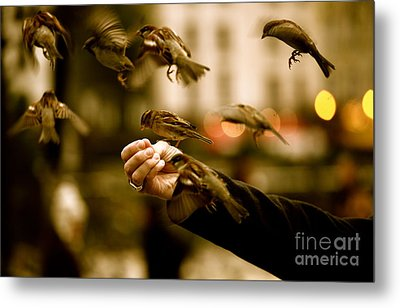 The Birds Metal Print by Zarija Pavikevik