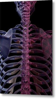 The Bones Of The Upper Body Metal Print by MedicalRF.com