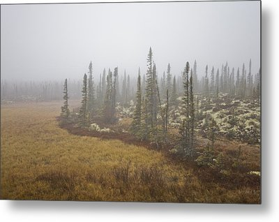The Boreal Forest On A Foggy Day Metal Print by Taylor S. Kennedy