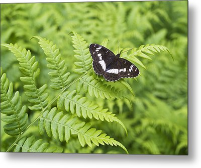 Metal Print featuring the photograph The Butterfly On Fern Sheet by Aleksandr Volkov