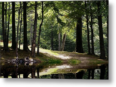 The Calm Of The Forest Metal Print by Bogdan M Nicolae