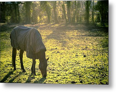 The Cold Horse Metal Print