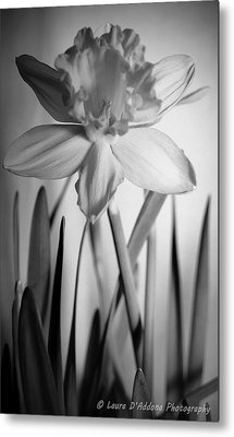 The Color Of Beauty Metal Print by Laura DAddona