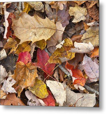 The Color Of Fall Metal Print