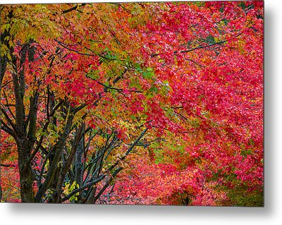 The Color Of Fall Metal Print by Ken Stanback