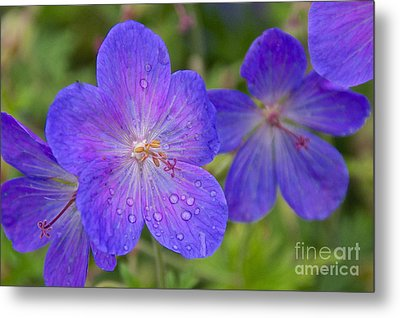 The Color Purple Metal Print by Sean Griffin