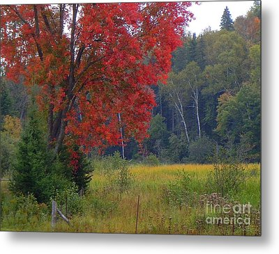 The Colors Of Fall Metal Print by Anne Gordon