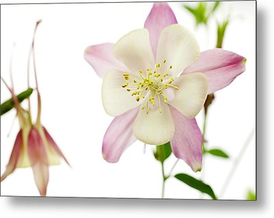 The Columbine Metal Print by Brad Rickerby