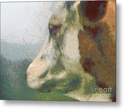 The Cow Portrait Metal Print by Odon Czintos