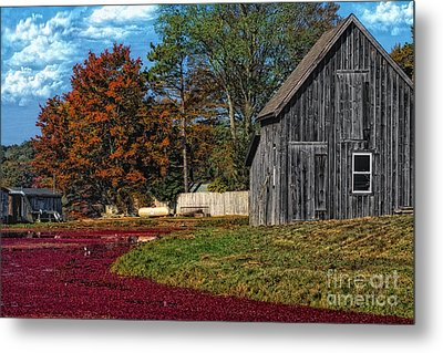 The Cranberry Farm Metal Print by Gina Cormier