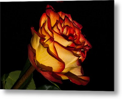 The Deepness Of A Rose 1 Metal Print by Douglas Barnett