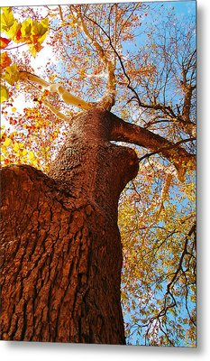 The Deer  Autumn Leaves Tree Metal Print by Peggy Franz