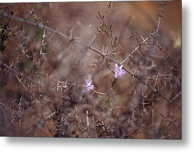 The Delicate Fringe Lily Flower Twining Metal Print by Jason Edwards