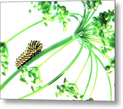 The Dill Express Metal Print by Amy Tyler