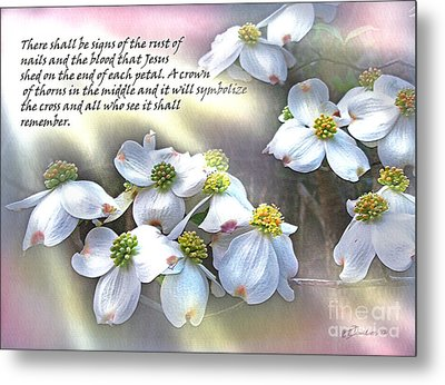 The Dogwood Flower Metal Print by Patricia L Davidson